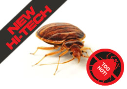 Heat Treat Bed Bugs