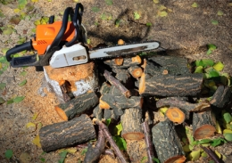 Tree & Tree Stump Removal